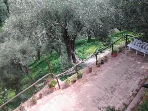 Terrazza dove pranzare all'ombra degli ulivi secolari o prendere il sole